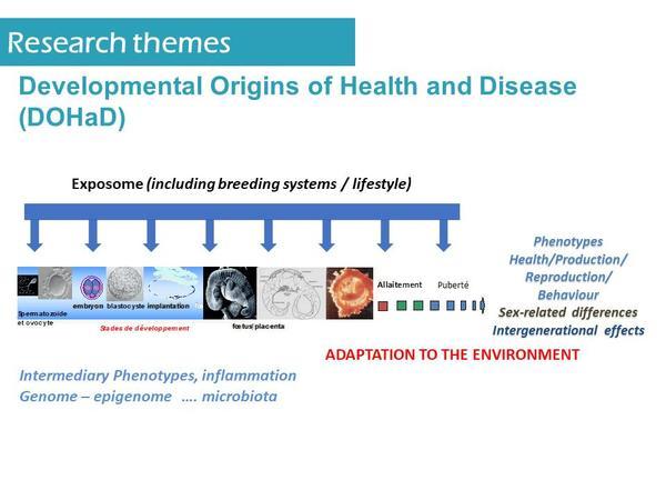 02 Developmental Origins of Health and Disease
