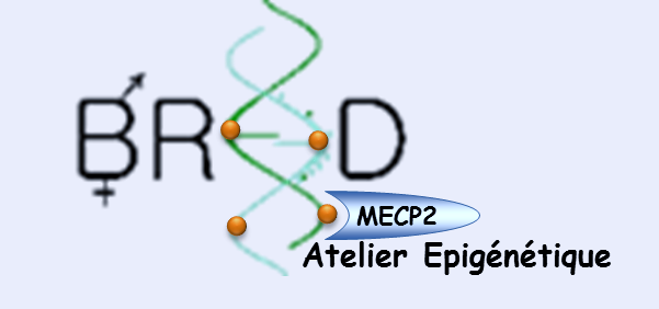 mecp2_005