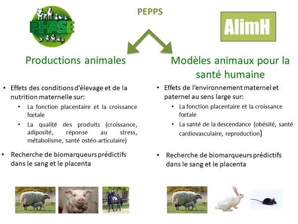 pepps_schema2