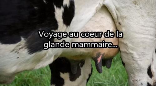 Vidéo Voyage au coeur de la glande mammaire