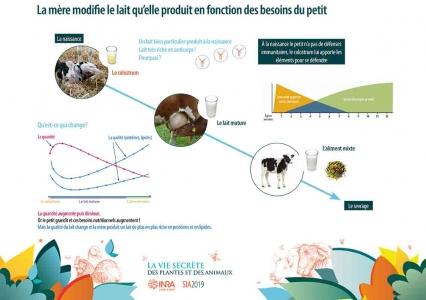 L'évolution du lait maternel en fonction des besoins du petit