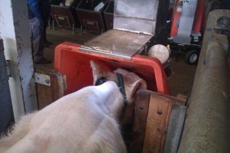Mesure méthane bovins