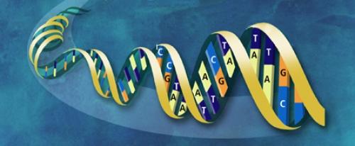 Identification de deux mutations responsables de mortalité embryonnaire en race Holstein.
