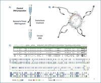 @E. Barrey Schéma d'amplification sélectif du génome mitochondrial
