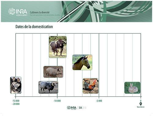Dates de la domestication pour quelques espèces animales