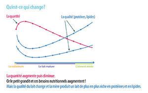 Graphique qui montre ce qui change au cours de la lactation