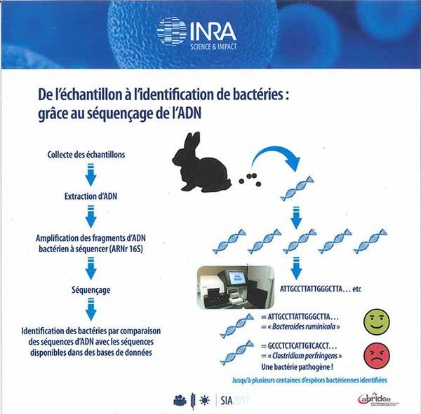 Schéma de l'identification des bactéries