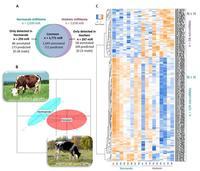 @S. Le Guillou. Comparaison des miRNomes du lait de Normande et de Holstein.