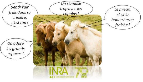 des chevaux en bonne santé