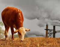 image-environnement-quizz-lait