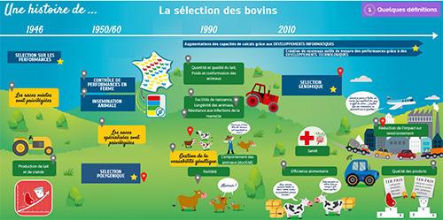 Histoire de la sélection bovine