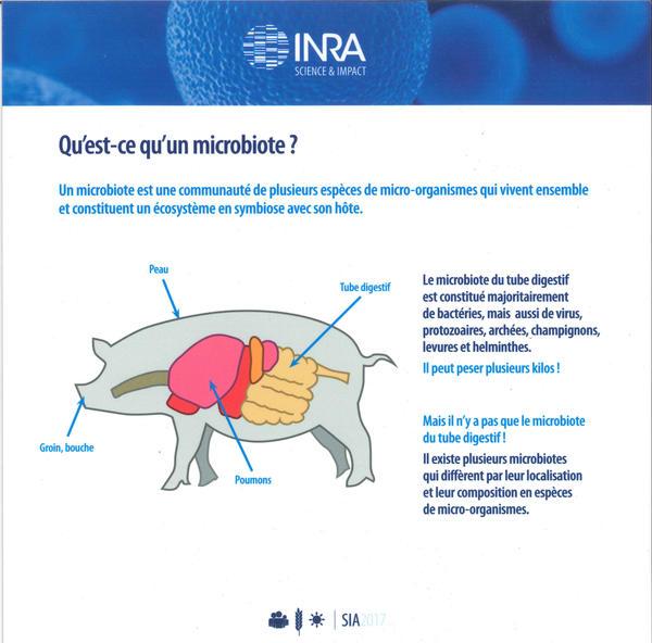 Schéma qui explique la présence du microbiote