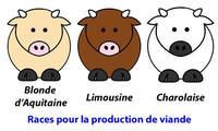 Races à viande : Blonde d'Aquitaine, Limousine, Charolaise