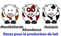 Races laitières : Montbéliarde, Abondance, Holstein