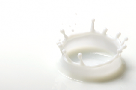 Genetic determinism of the protein composition of milk
