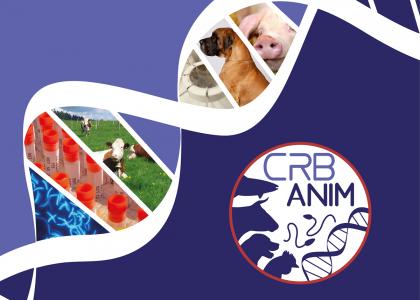 @CRB-Anim