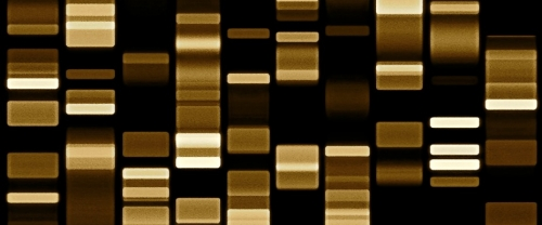 Mapping of domestic animal genomes