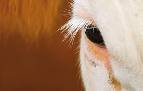 Conscience animale : des connaissances nouvelles