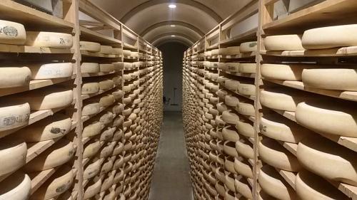 Déterminisme génétique de l'aptitude fromagère du lait.