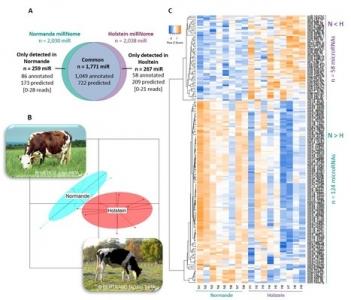 La composition en microARNs du lait bovin