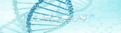 UMR 1313 GABI - Génétique Animale et Biologie Intégrative