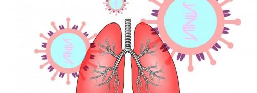 ICARE : cartographier les cellules du poumon ciblées par le SARS-CoV-2