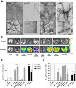 Les fibres de type amyloïde formées par le facteur de virulence PB1-F2 du virus de la grippe induisent une réponse pro-inflammatoire et participent à la détresse respiratoire chez des souris infectées