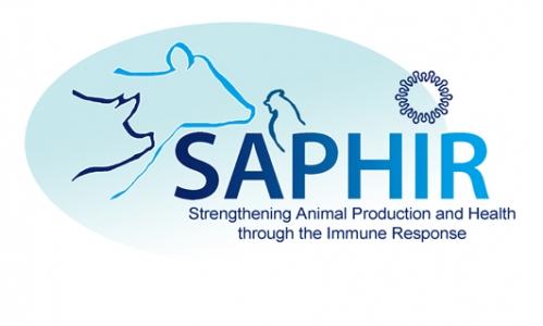 Développement de stratégies vaccinales contre les maladies endémiques en élevage :