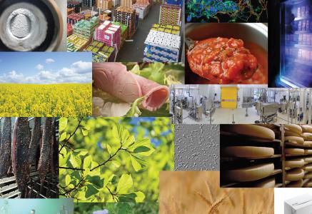 Rapport Recherche et Innovation 2020 du département TRANSFORM
