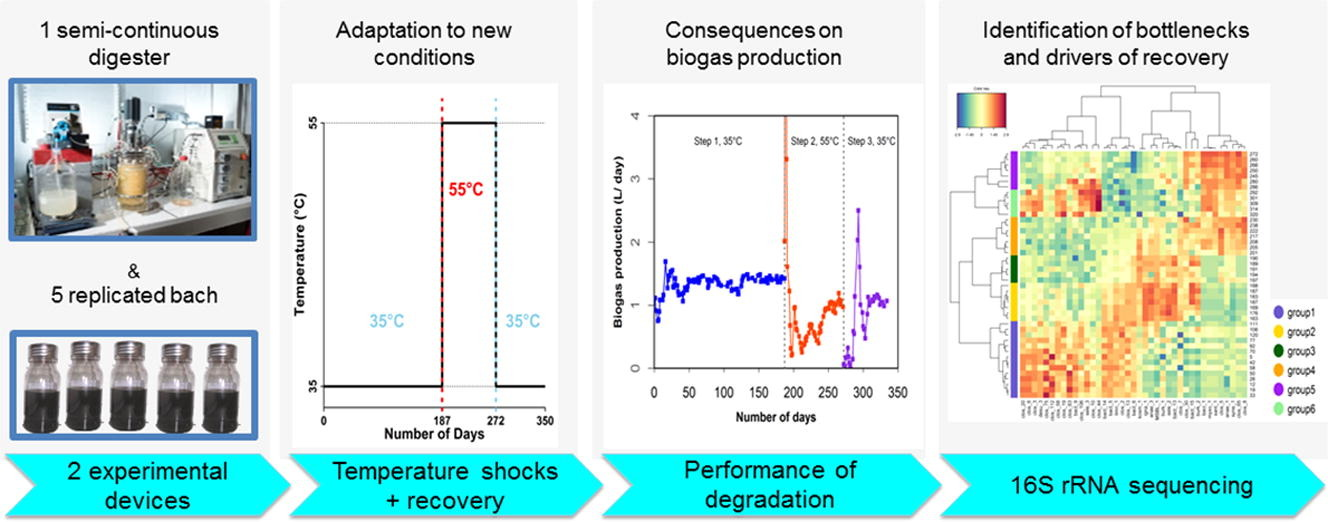 Ecological consequences of abrupt temperature changes in anaerobic digesters.