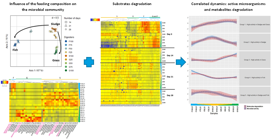Integrative analyses to investigate the link between microbial activity and metabolites degradation during anaerobic digestion
