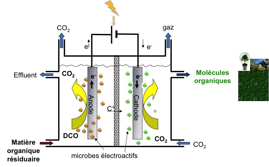Schéma de principe d'un pilote bioélectrochimique pour la biorafinnerie environnementale