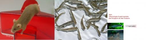 UE 907 - Infectiologie Expérimentale des Rongeurs et des Poissons (IERP)