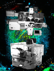 vignette microscopie CLSM