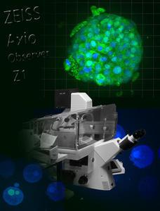 vignette vidéomicroscopie